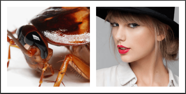 5 Reasons Why Cockroaches Are Scarier Than Dating Taylor Swift - All time lists